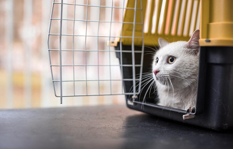 ارسال حیوانات خانگی به خارج